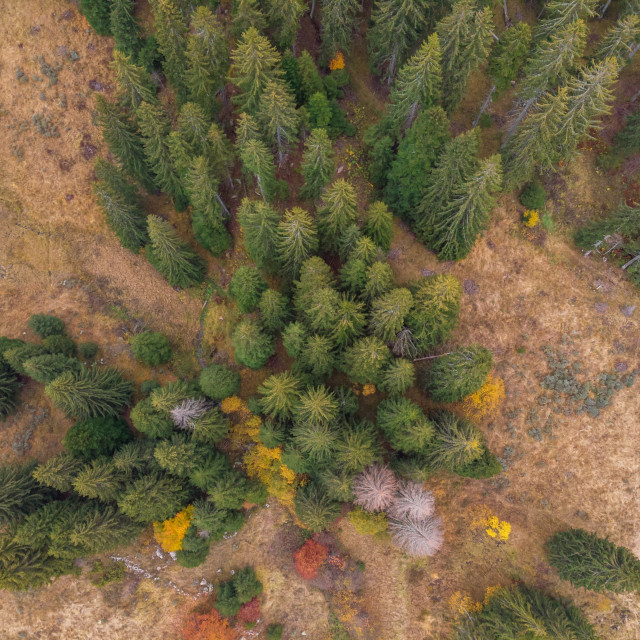 """""""Aerial drone view on a forest with colourful leaves during autum"""" stock image"""