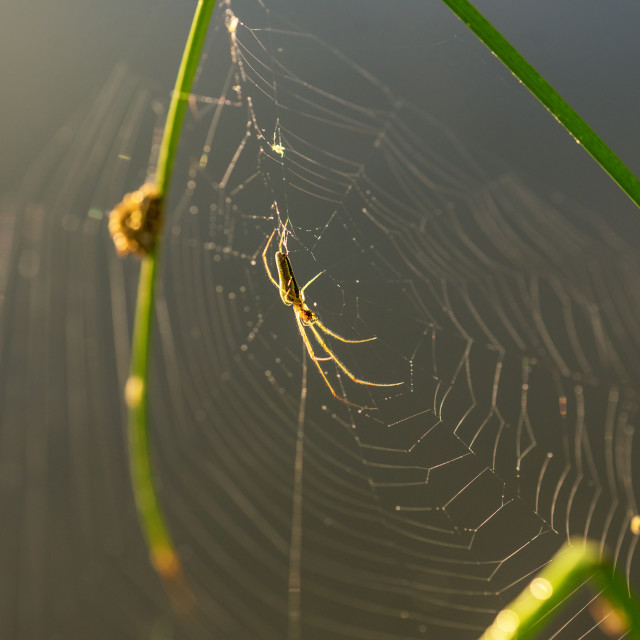 """""""Morning drops of dew in a spider web."""" stock image"""