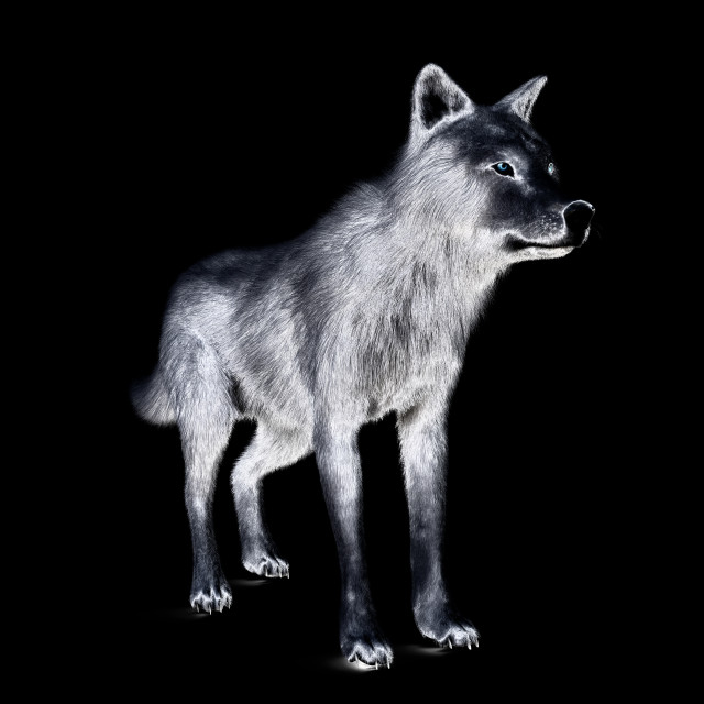 """""""Digital 3D Illustration of a Wolf"""" stock image"""