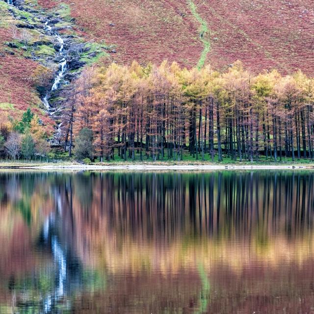 """""""Autumn Reflection."""" stock image"""