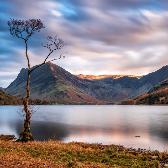 """Buttermere Lone Tree."" stock image"