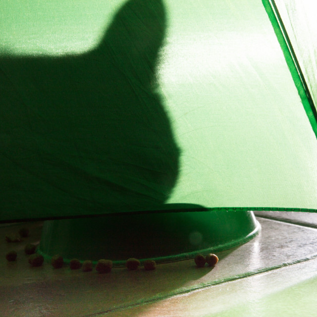 """shadow of a cat on a green background"" stock image"
