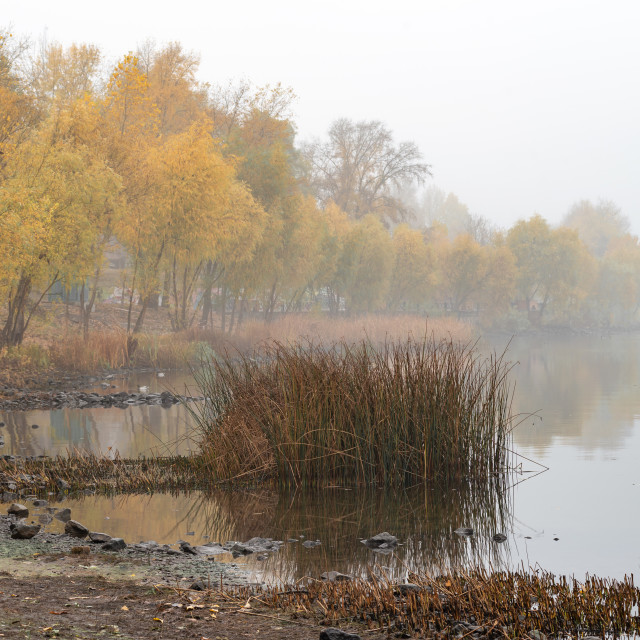 """Reeds and trees close to the Dnieper river in Kiev"" stock image"
