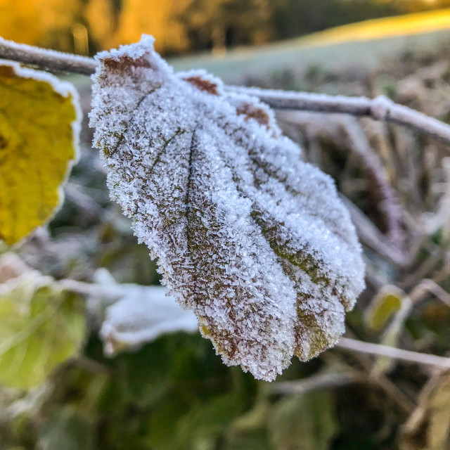 """""""Close up of frost on a leaf"""" stock image"""