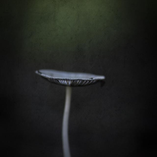 """Macro Mushroom"" stock image"