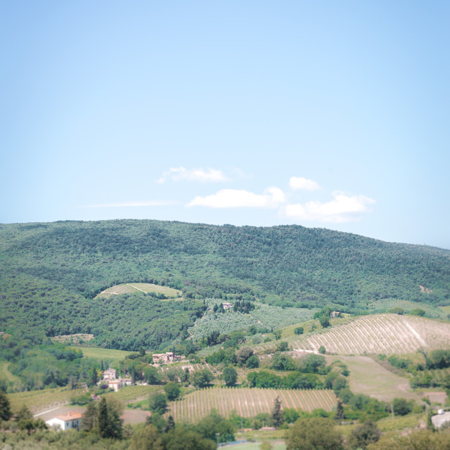 """""""View into a Tuscany country in summer"""" stock image"""
