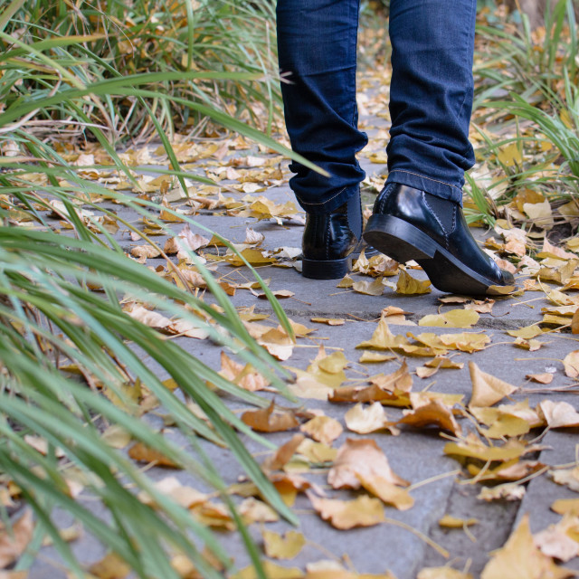 """Low Section Of girl Wearing Shoes While Walking On Autumn Leaves At Footpath"" stock image"