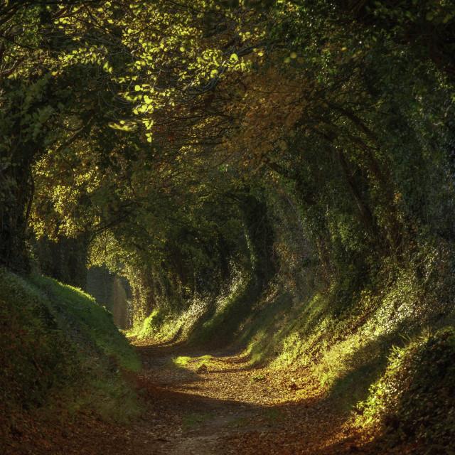 """Halnaker Path"" stock image"