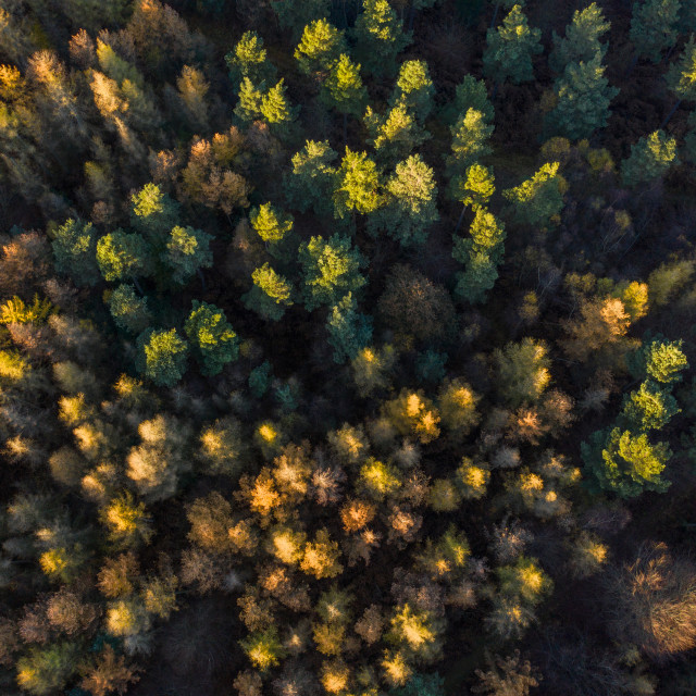 """Top down of Autumnal Trees"" stock image"