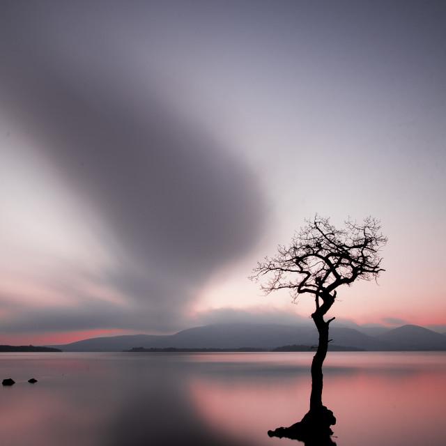 """""""Lone Tree - Milarrochy Bay"""" stock image"""