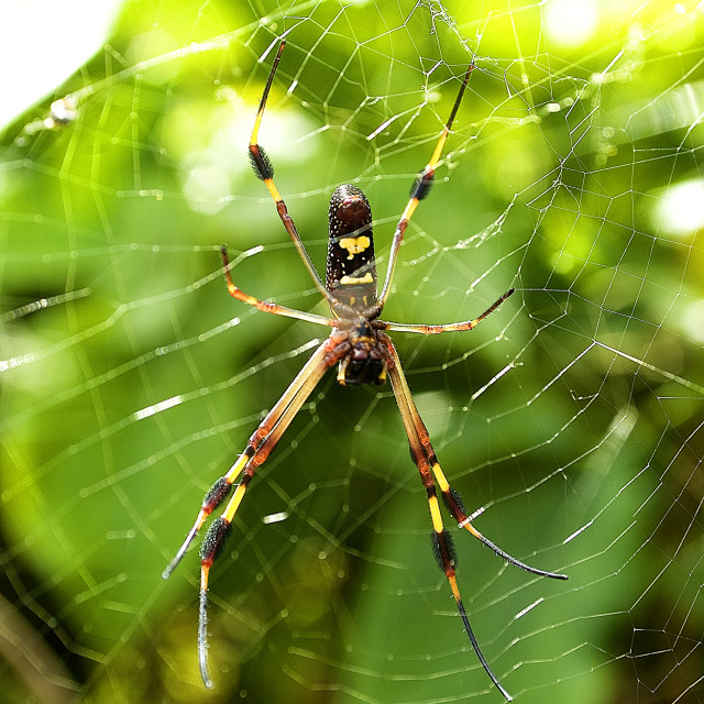 """""""Spider In Its Web Jamaica"""" stock image"""