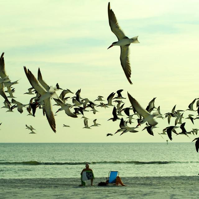 """Flock Of Birds On Beach"" stock image"