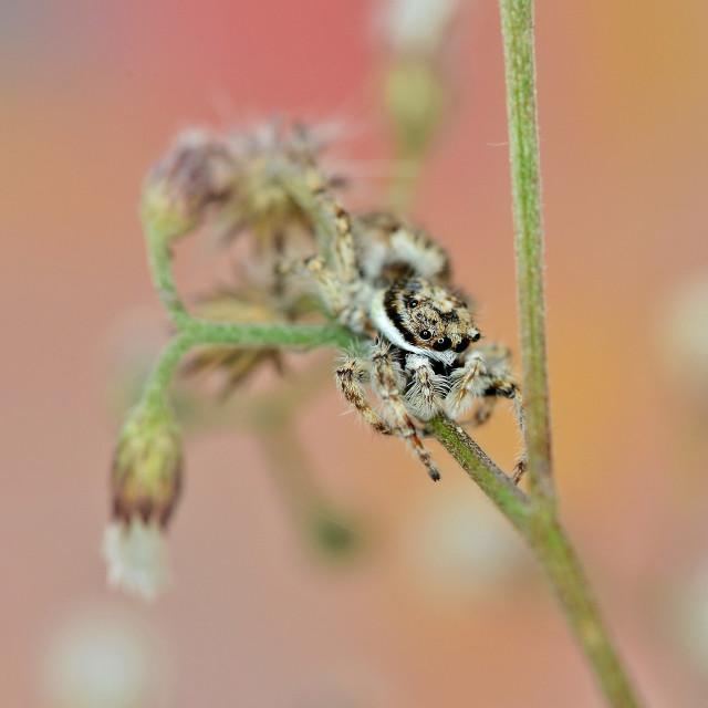 """Little spider in the garden"" stock image"