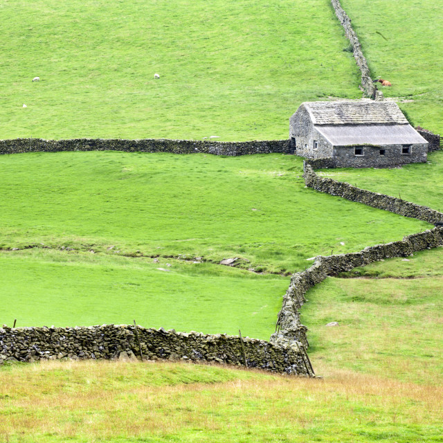 """""""Field Barn and Dry Stone Walls in Crummack Dale"""" stock image"""