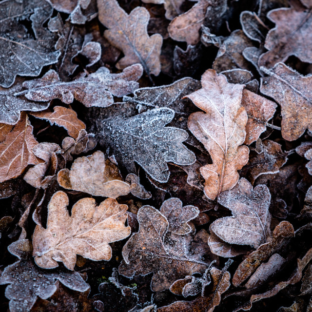 """Frosty Forest Floor"" stock image"