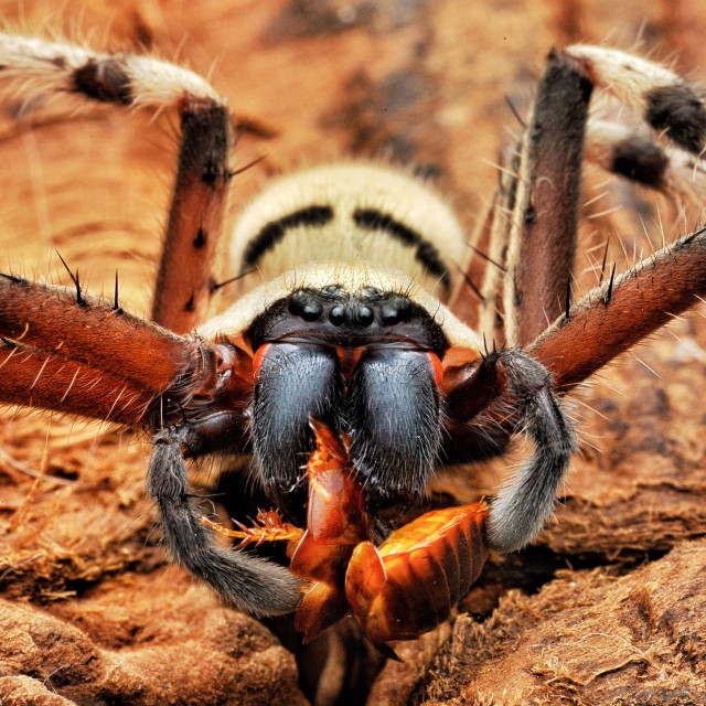 """""""Spider And Prey"""" stock image"""