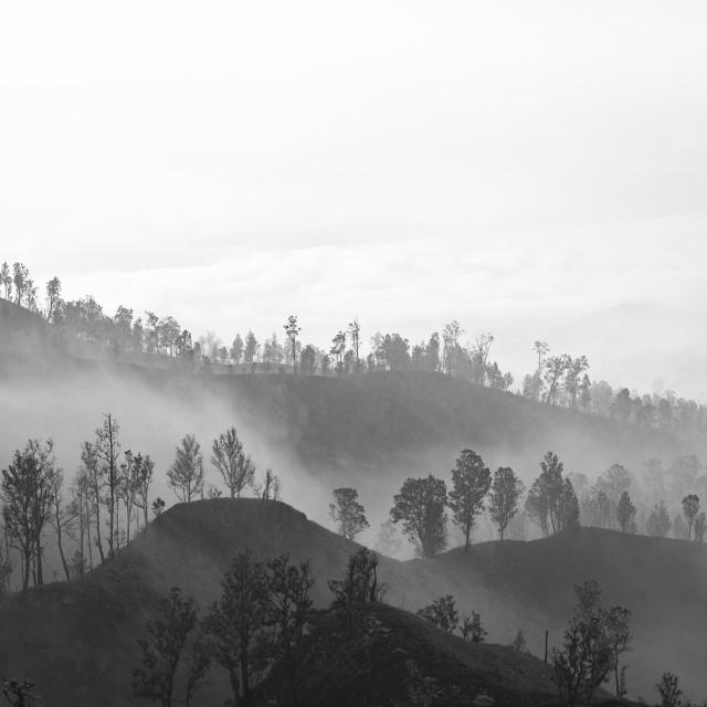 """Dusty Fog"" stock image"