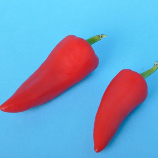 """""""red long pepper on blue bacground"""" stock image"""