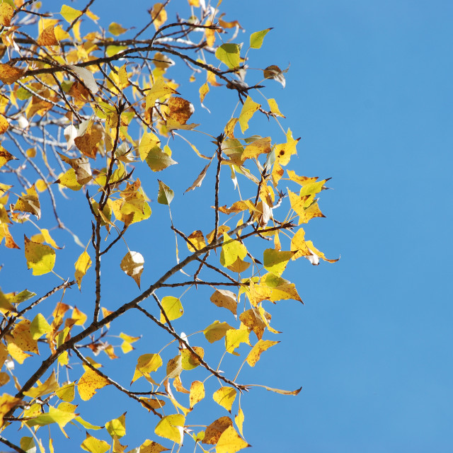 """""""Tree in autumn colours"""" stock image"""