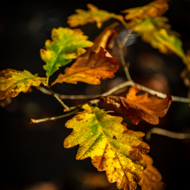 """""""Autumn Leaves At Padley Gorge"""" stock image"""