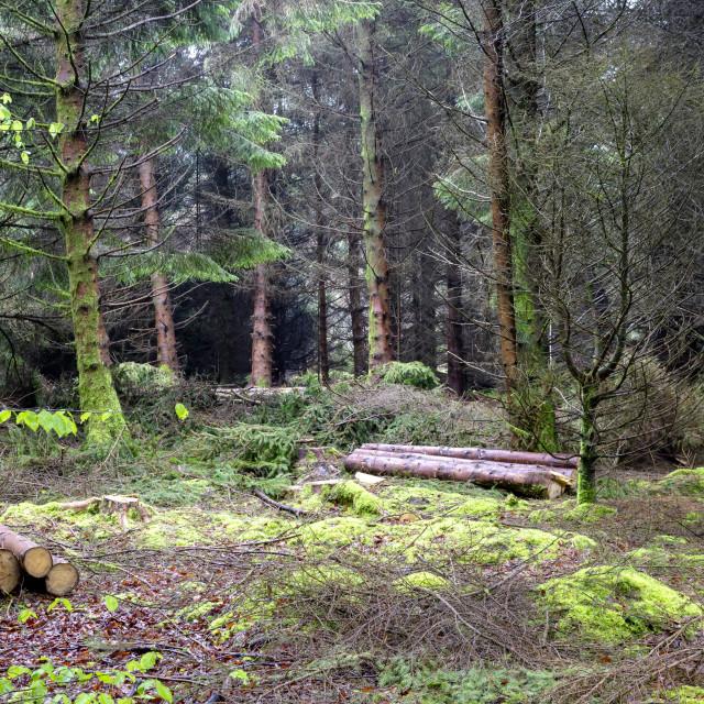 """""""Mossy Woodland"""" stock image"""