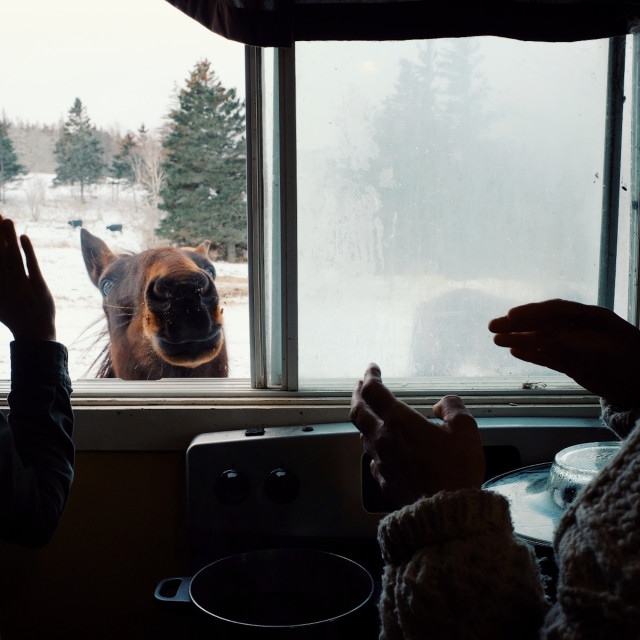 """""""two woman playing and feeding a horse from inside their home through a window during winter"""" stock image"""