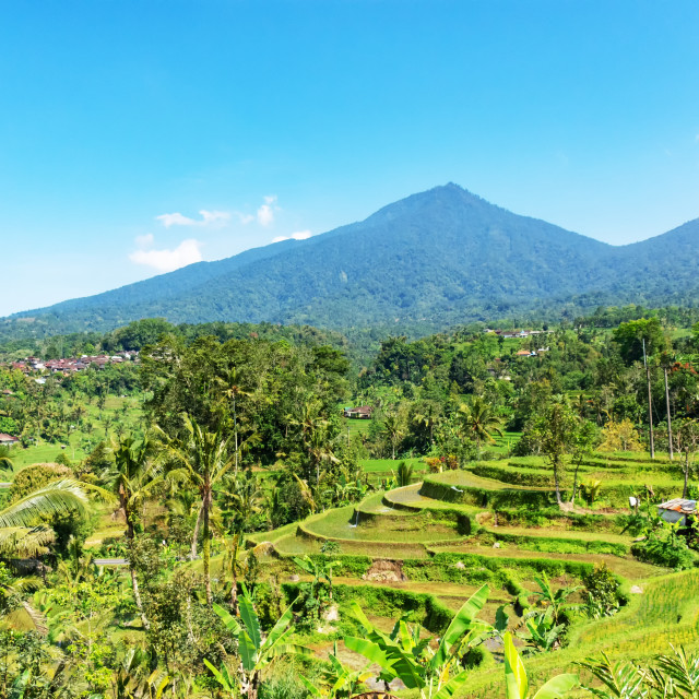"""Scenery of Jatiluwih rice terraces in Tabanan, Bali, Indonesia."" stock image"