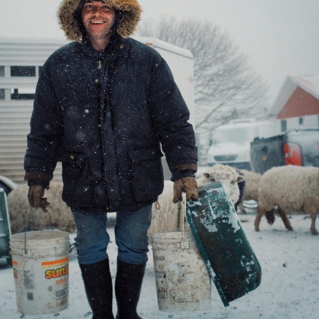 """""""local farmer feeding his animals from buckets of grain and minced vegetables during a snow storm with sheep walking in the background"""" stock image"""