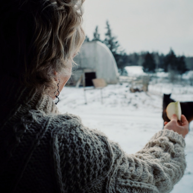 """""""woman playing and feeding a horse from inside her home through a window during winter"""" stock image"""