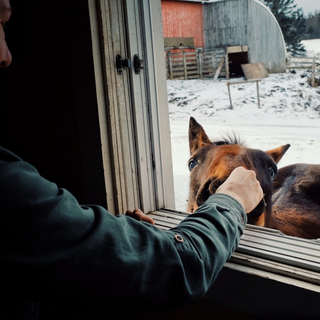"""""""young woman playing and feeding a horse from inside her home through a window during winter"""" stock image"""