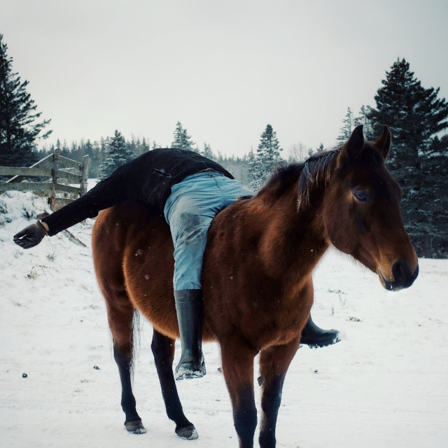 """""""local farmer man having fun and laying down on his horse outside during winter in the snow"""" stock image"""
