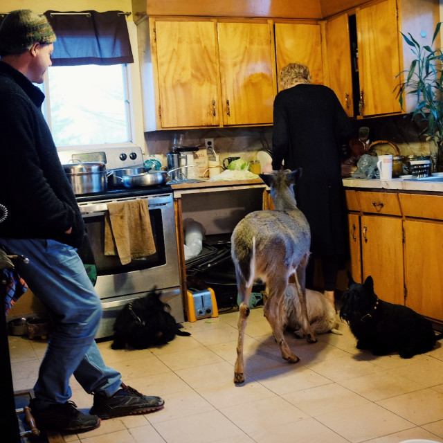 """""""modern farmer family with their pet domesticated deer during the winter inside their home cooking christmas dinner supper"""" stock image"""