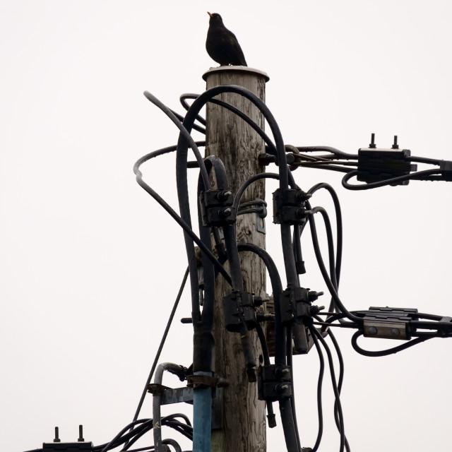 """Electric bird"" stock image"