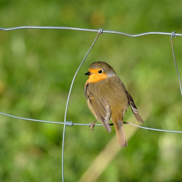 """Bird on the fence"" stock image"