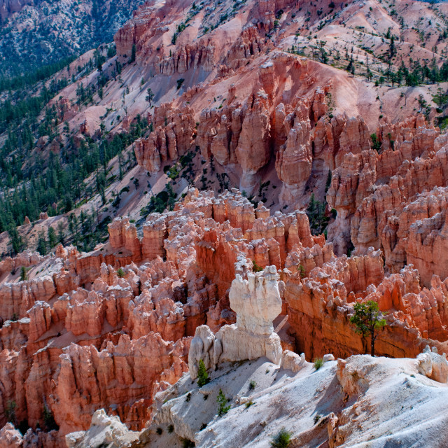 """Amphitheater from Inspiration Point at dawn, Bryce Canyon National Park, Utah, United States of America."" stock image"