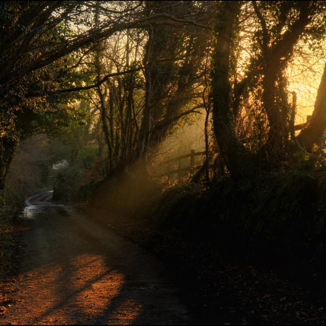 """""""Early morning sunrise"""" stock image"""