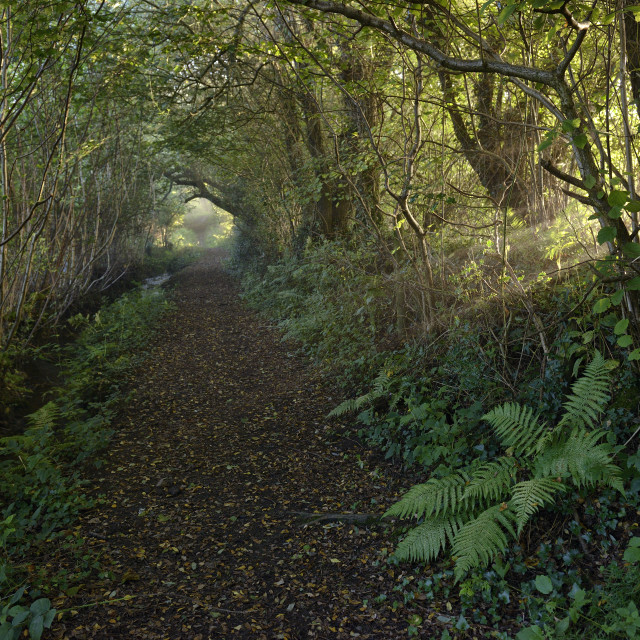 """Footpath to North Bovey."" stock image"