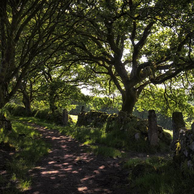 """Old Drovers trackway, Walkham Valley, Dartmoor."" stock image"