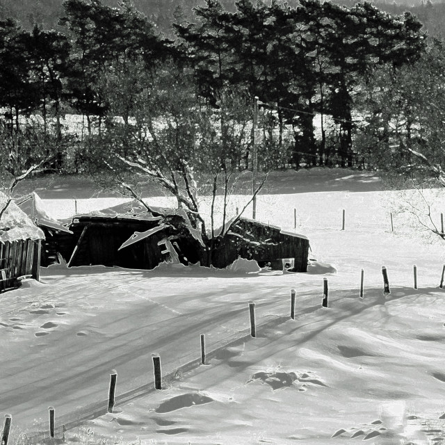 """""""Black And White Winter"""" stock image"""
