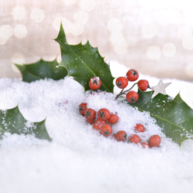 """leaf of holly ans red berries in the snow"" stock image"