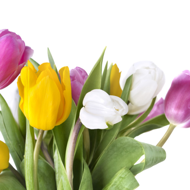 """bouquet of colorful tulips"" stock image"