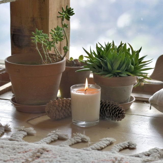 """plants and candle in front of paned of glass"" stock image"