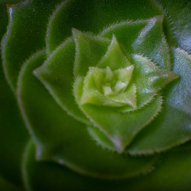 """Salad Bowl Plant"" stock image"