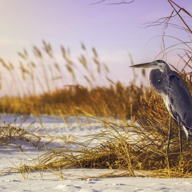 """Old Sam on Pensacola Beach"" stock image"