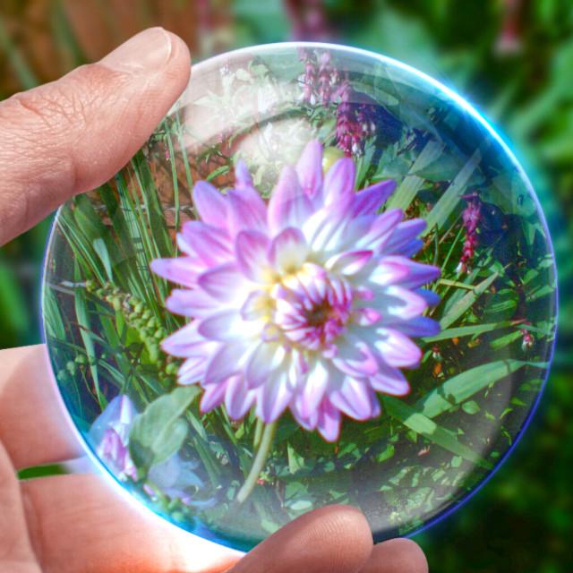 """Flower crystal ball"" stock image"