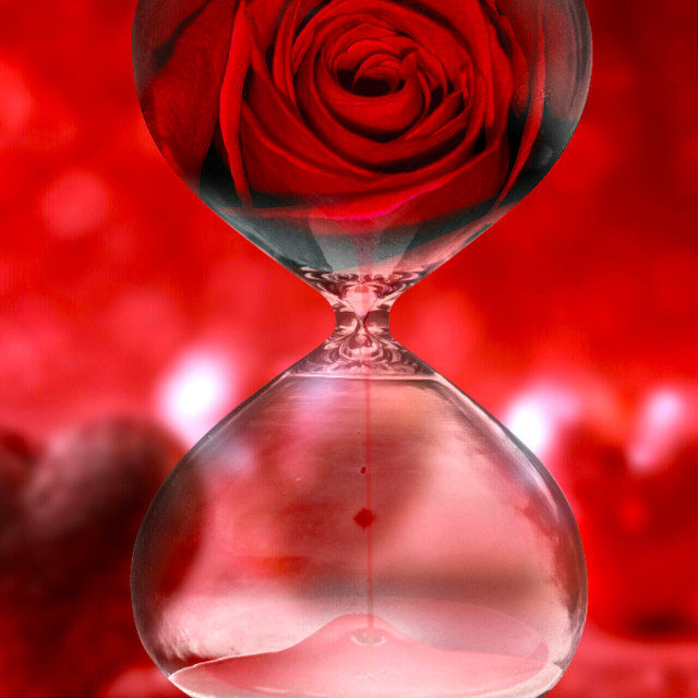 """""""Red rose in a hourglass"""" stock image"""