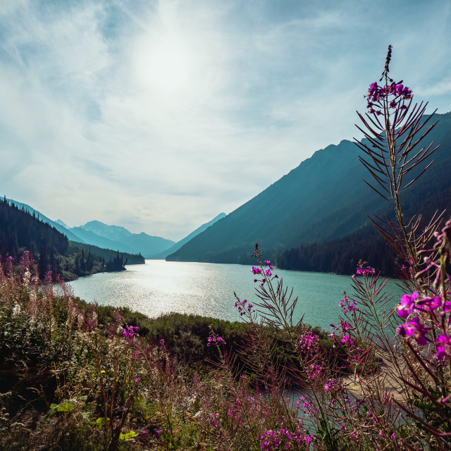 """Purple Flower, Teal Lake"" stock image"