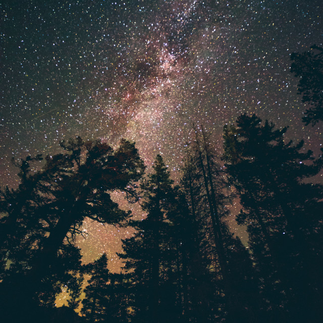 """""""Silhouettes and stars"""" stock image"""