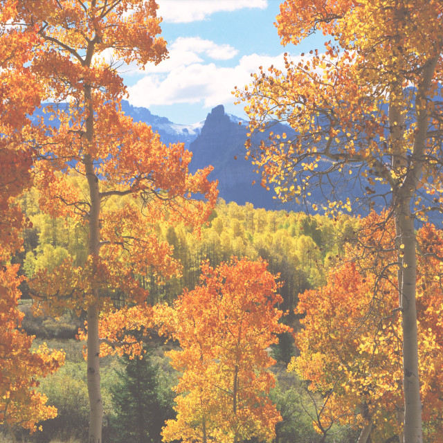 """""""Autumn colors in the mountains of Colorado"""" stock image"""