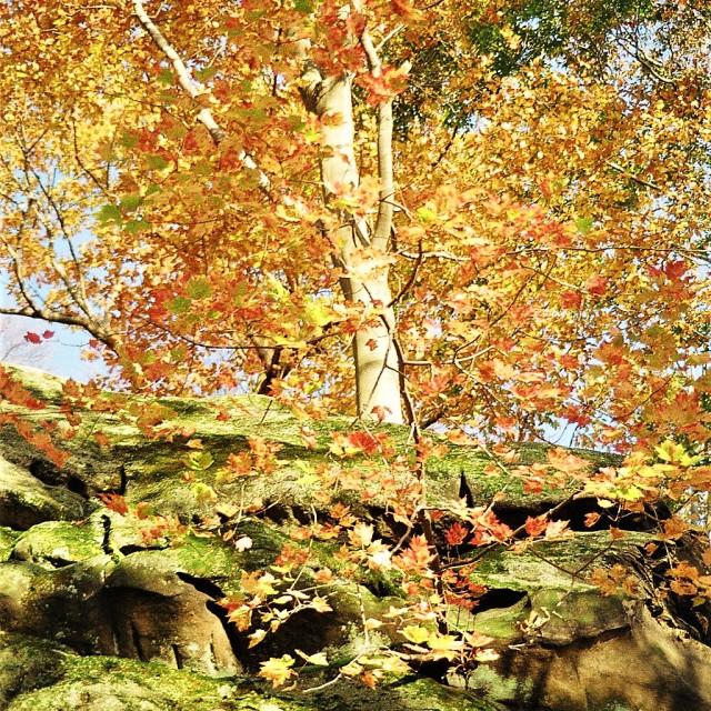 """Fall tree"" stock image"